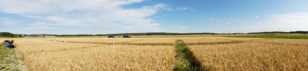 fields wide